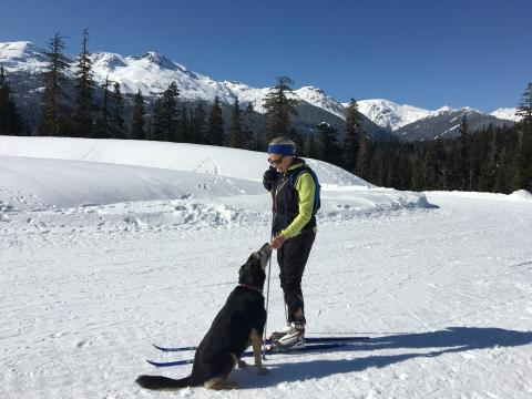 Dog sitting on ski trail