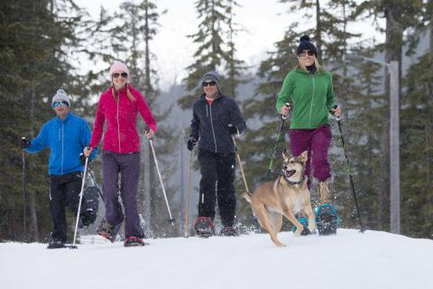 Group snowshoeing with dog