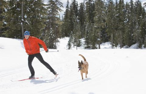 Cross country skier with dog